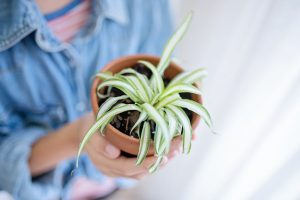 home plants that purify air
