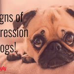 depression in dogs