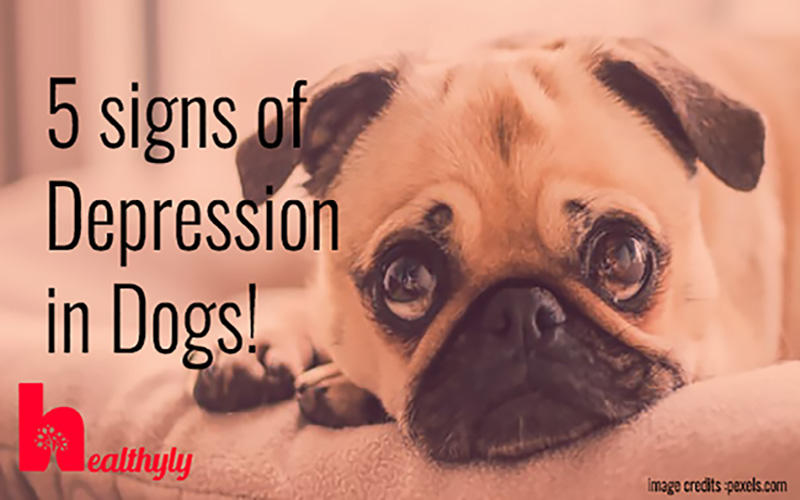 5 Signs of depression in dogs, know them before its too late!